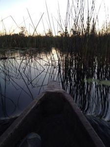 Gliding through the reeds