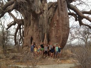 1,500 year old Boabab Tree!
