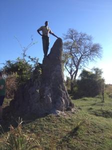 Huge, rock hard termite mound.