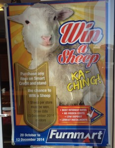 Win a free sheep!