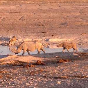 Mama Rhino and Baby Rhino