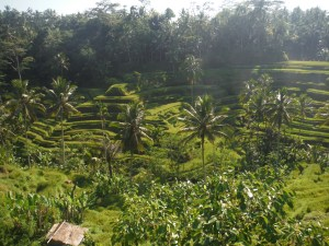 Rice Paddies staggered on the hillside.