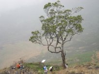 The Magic Tree on Mount Cameroon